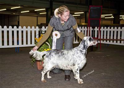 Setter & Pointer Best puppy in show 2009.jpg