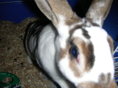 2006 Dotty bunny