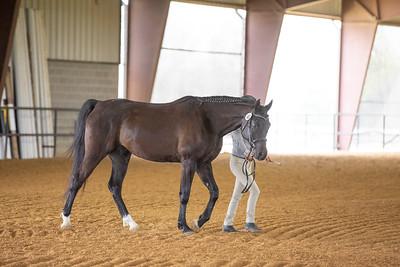 Horse 481