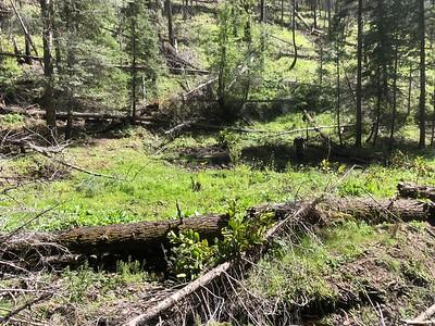 2018 Continental Divide Trail, Gila NF