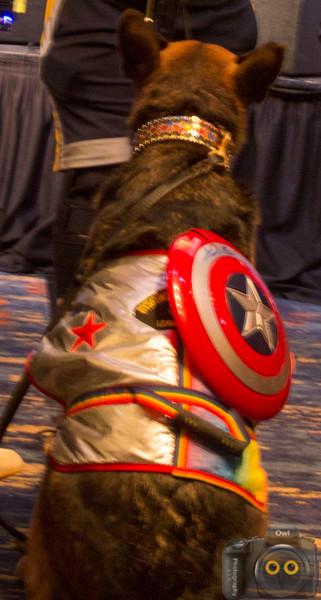 Captain AmeraDog
