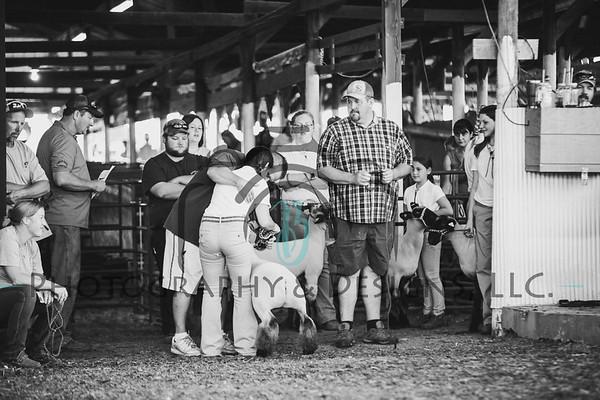 Lamb Barn