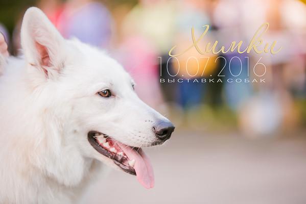 Dog Show 10.07.2016