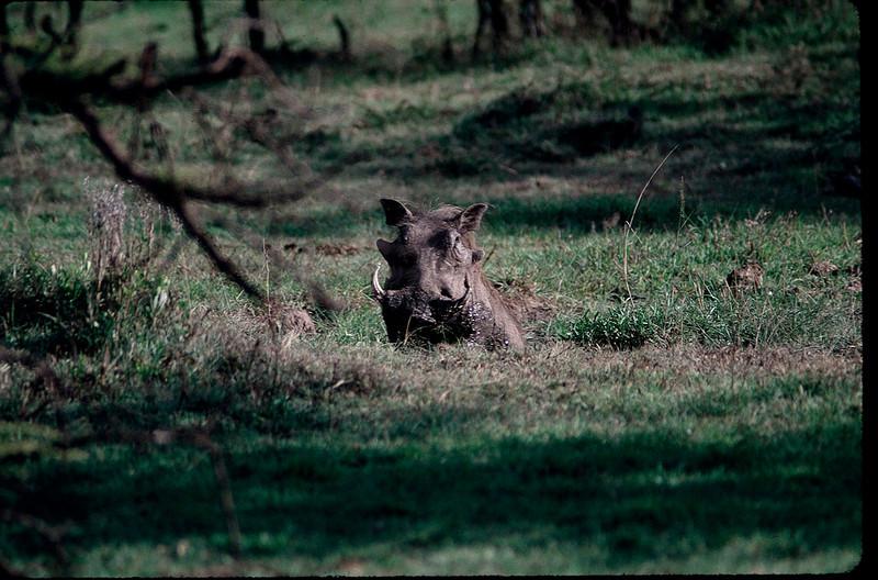 Kenya2_009.jpg