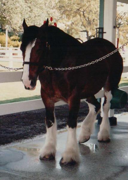 1991-12 Busch Gardens   Henri + Sasha   Florida