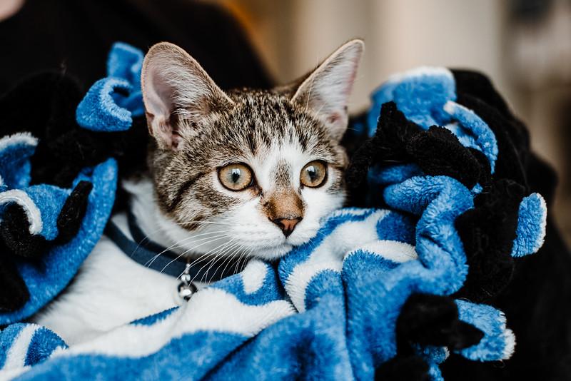 October 26, 2018 cat day DSC_9979.jpg