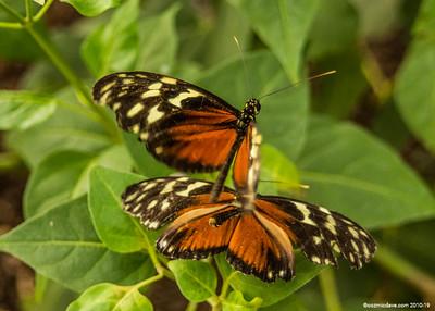 Butterflies & Moths 2018 - Set 4
