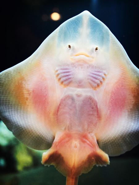 Seattle Aquarium V