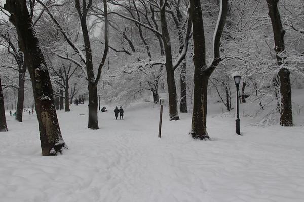 Snowy Sunday - February 7, 2021