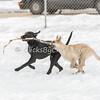 Dogs - Saturday, Feb. 7, 2015 - Frame: 3713