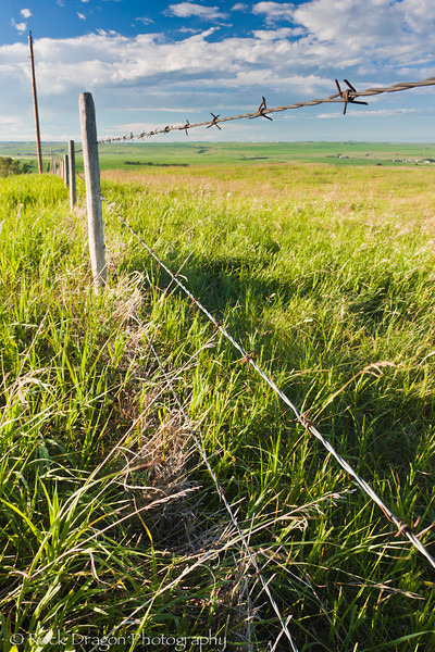 A barb wire fence along Range Road 24 in Alberta.