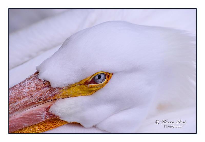 Close up of birds eye sm.jpg
