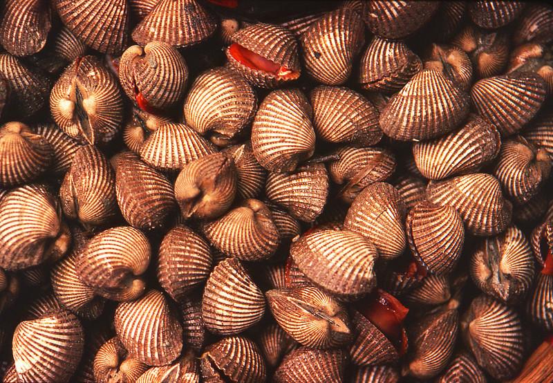 market clams.jpg