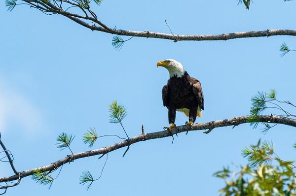Misc Lake - Eagles