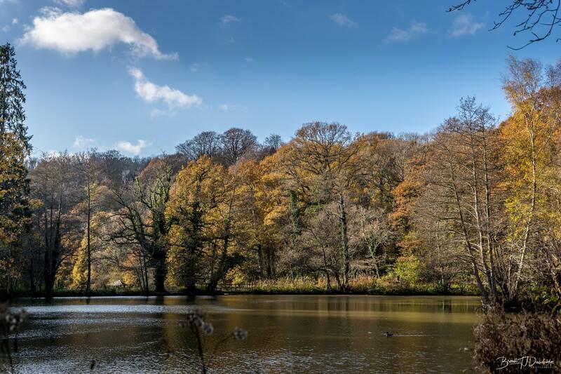Wakehurst_Autumn-6126.jpg