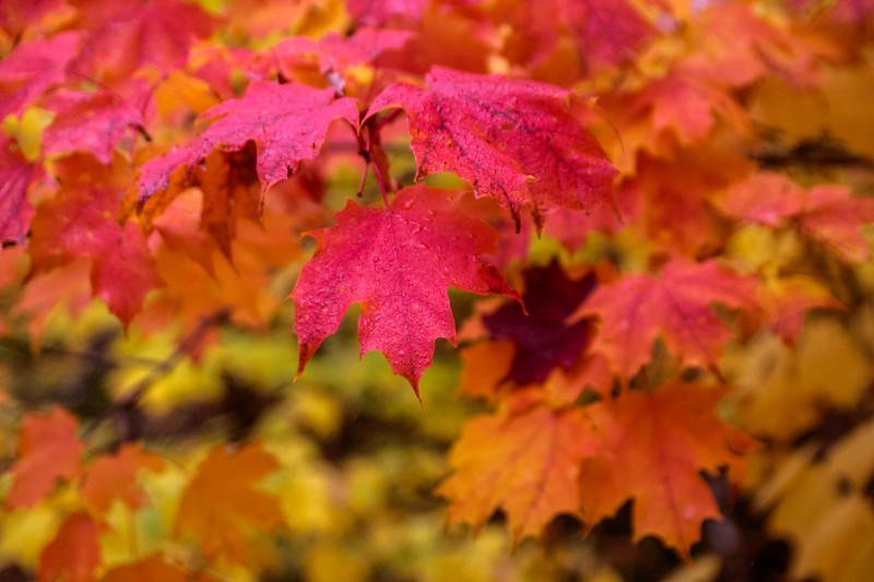 2012-10-06 Colorfest Interstude-0012.jpg