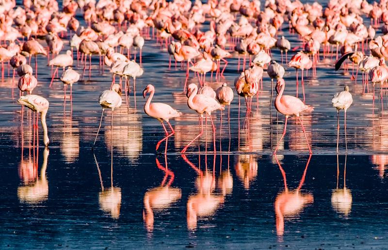 Flamingos-4.jpg