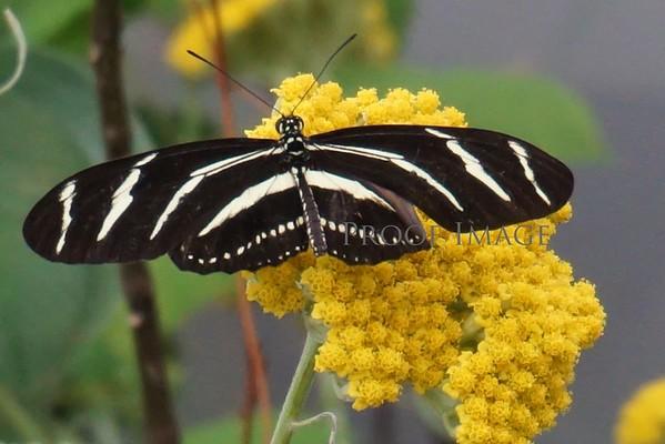 San Francisco Conservatory Butterflies