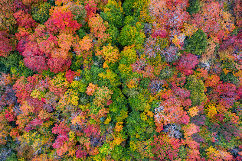 Fall season in NY, a chromatic explosion