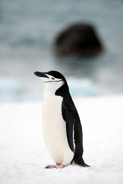 091204_penguin_island_8121.jpg