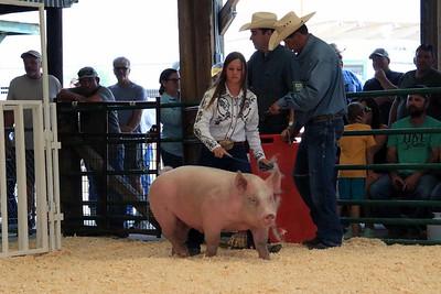 Intermediate Swine Showmanship