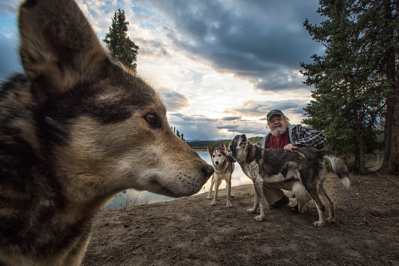 Yukon Quest dogmusher Frank Turner at his property along the Takhini River near Whitehorse, Yukon. Frank is taking his dogs for a walk, these dogs are his retired racers who are too old to race and now live in his garage.