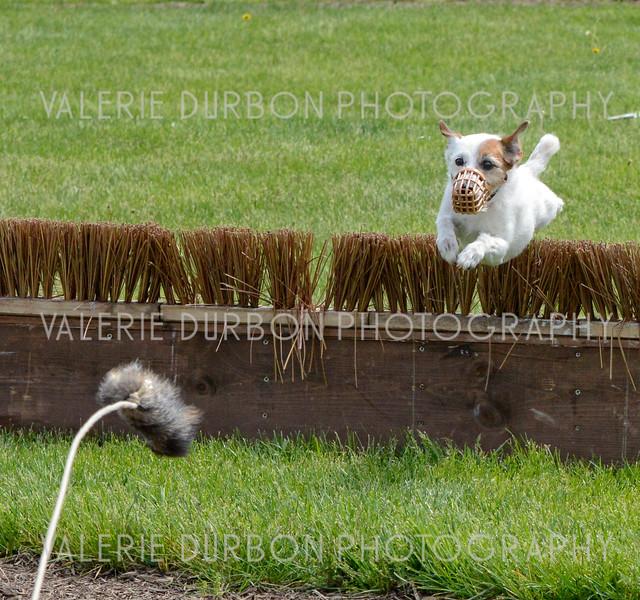 Valerie Durbon Photography Terrier1.jpg