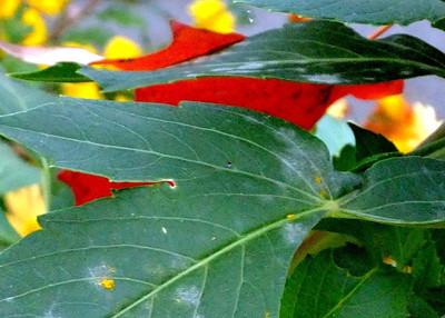 Flowersand- plants