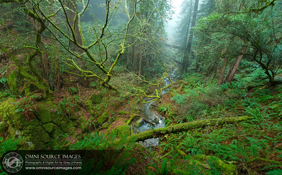Bay Area Hiking Trails