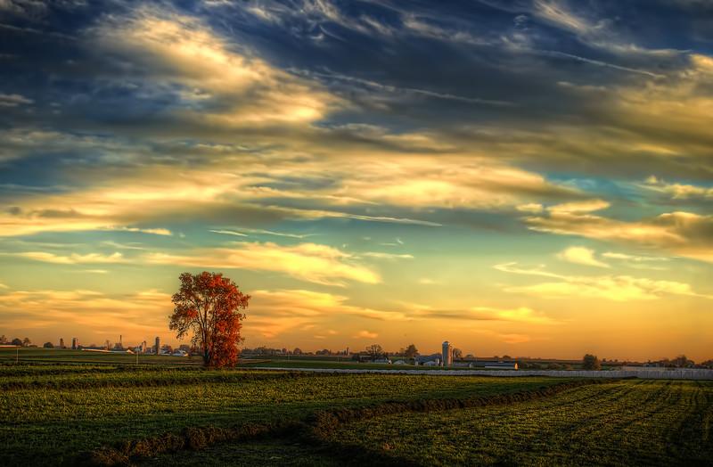 autumn 2014 - orange tree in the country(p).jpg