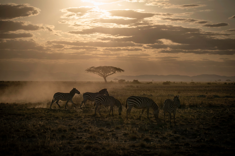 Beija Waltmunson - Kenya and Amboseli with Zebras.jpg