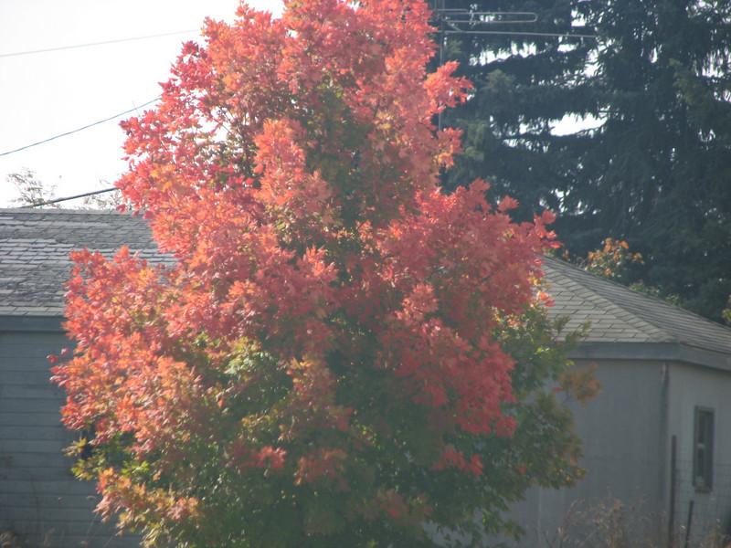 Fall pics 2008 020.jpg
