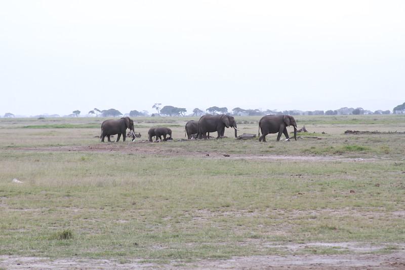 Kenya 2019 #2 318.JPG