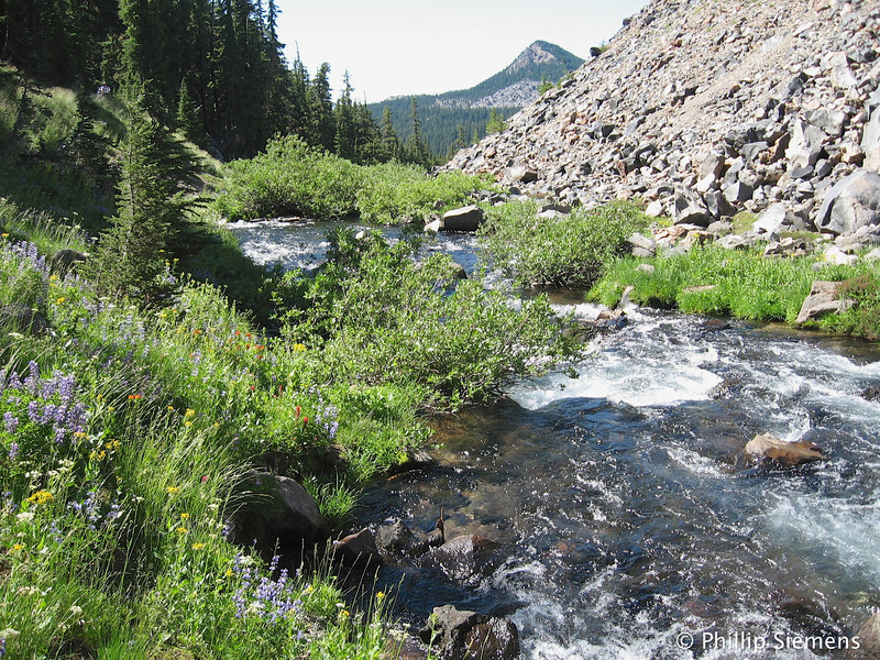 Fall Creek: between lava and forest