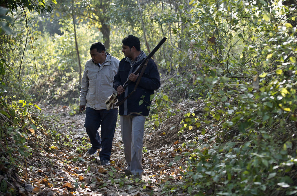 . (FILES) In this photograph taken on February 1, 2014, Uttar Pradesh State governments Assistant Conservator of Forests Mahesh Chandra (L) looks for tiger pugmarks with forest guard Mahipal as they walk in the woods near the village of Barahpur in Bijnor District some 120kms north-east of New Delhi. A man-eating tiger on the prowl in northern India has claimed its ninth victim, defying hunters and wildlife officials who have been trying to gun down the animal, an official told AFPon Fabruary 7, 2014.   AFP PHOTO/Prakash SINGH/FILESPRAKASH SINGH/AFP/Getty Images
