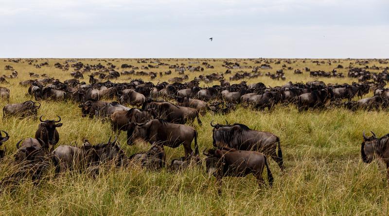 Kenya 2015-05510.jpg
