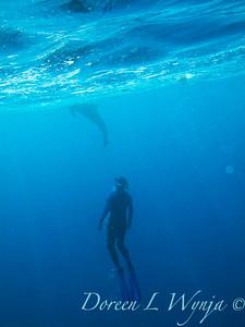 Hawaii - Tropics - Underwater