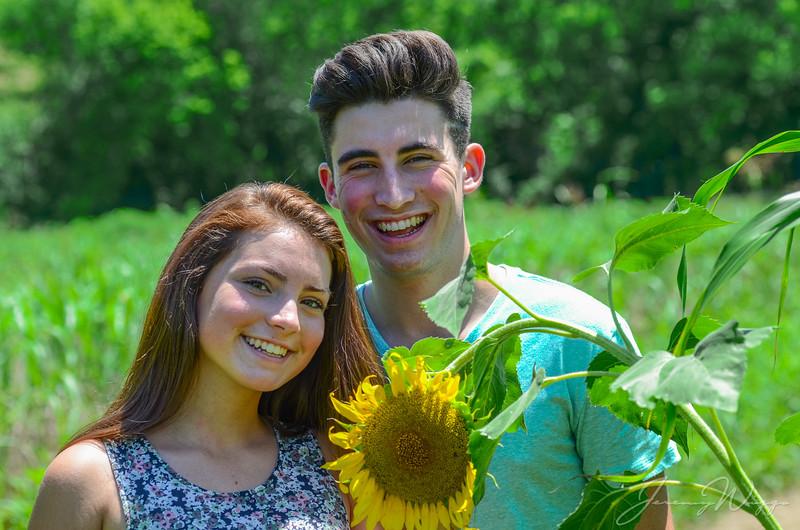 Sunflowers 2017