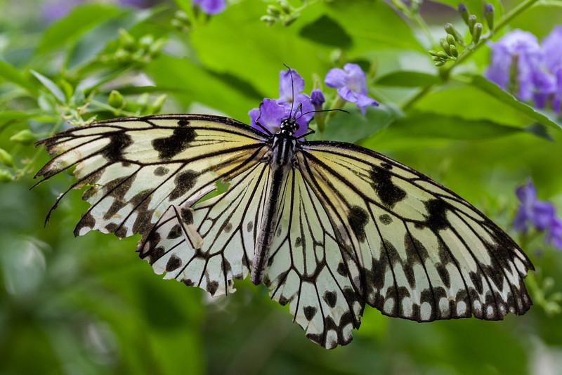 Butterfly Pavillion, Westminster