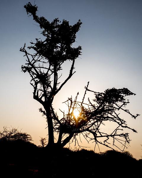 Jay Waltmunson Photography - Kenya 2019 - 107 - (DXT13266).jpg