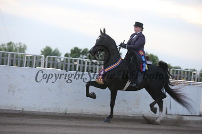 37. Three Gaited Jackpot