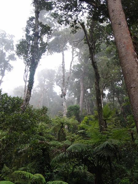 Kinabalu (6).jpg