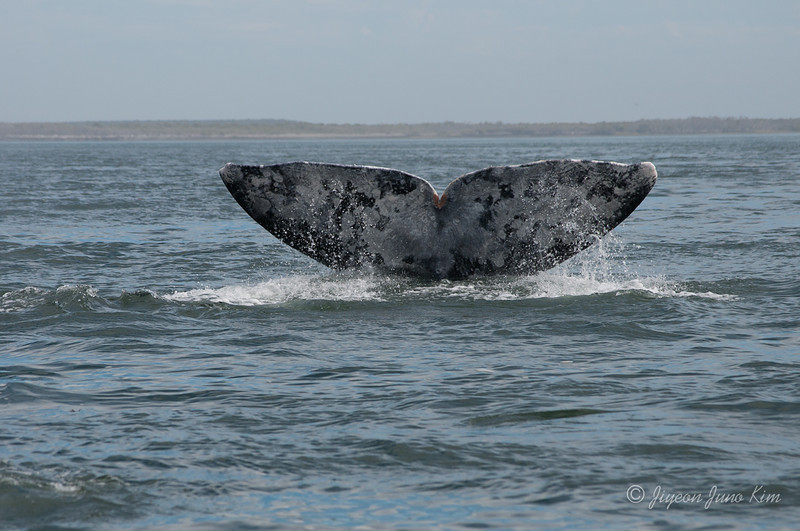 Mexico-Loreto-Whale-2380.jpg