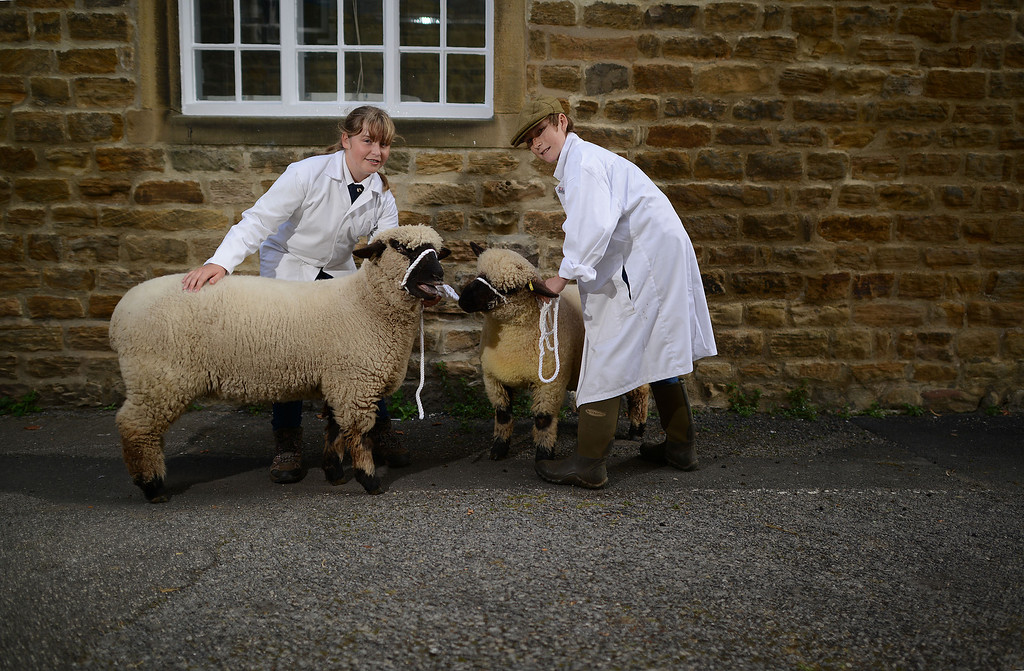 . MASHAM, UNITED KINGDOM - SEPTEMBER 28 Lucy Steele of Withernsea (L) with her champion Oxford Down Gimmer Lamb and David Holt of Pickering with his 2nd place Oxford Down Gimmer Lamb during the sheep fair in Masham September 28, 2013 in Masham. The fair, celebrating its 25th year, consists of many events over the weekend, including many sheep catagories such as sheep racing, sheepdog demonstrations and fleece stalls. (Photo by Nigel Roddis/Getty Images)