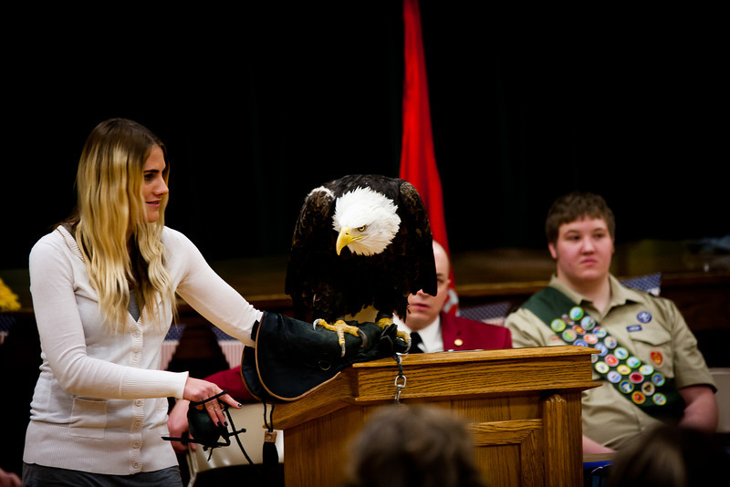 martin eagle-22.jpg