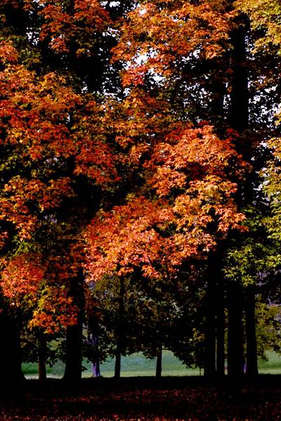 Arboretum Illinois jpg.jpg
