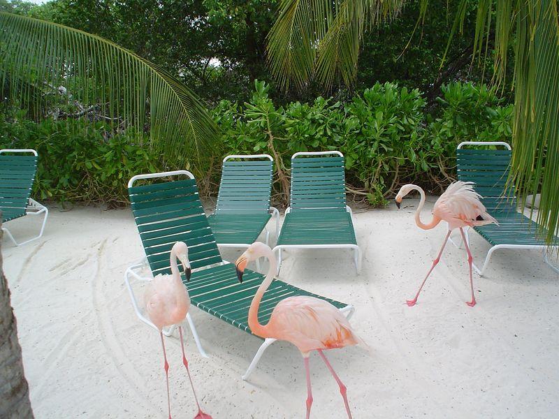 Aruba 2005 026.jpg