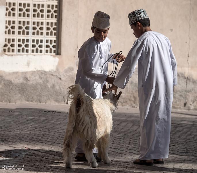 P1100537-1- Oman.jpg