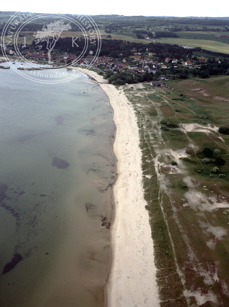 Vitemölle, north of. Beach and seabed (1991) | PH.0148