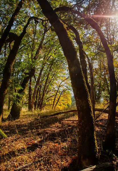 Deep Woods #6